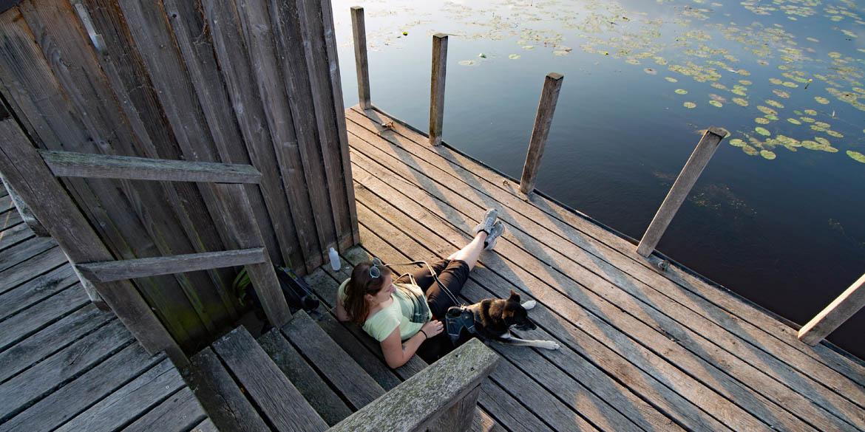 Hund ist es nicht geheuer: Naturphänomen Wackelwald