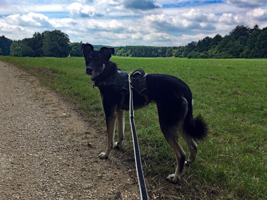 felsenmeer-und-wental-baden-wuerttemberg-copyright-hund-im-gepaeck-15