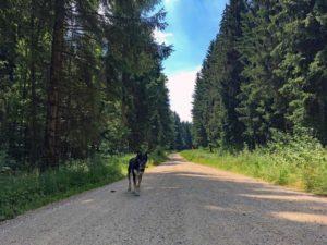 felsenmeer-und-wental-baden-wuerttemberg-copyright-hund-im-gepaeck-7