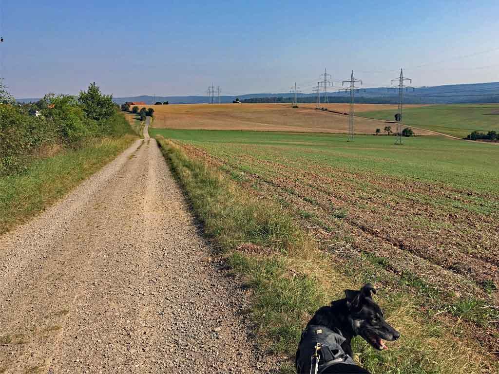 urwaldsteig-in-hessen-copyright-hund-im-gepaeck-5