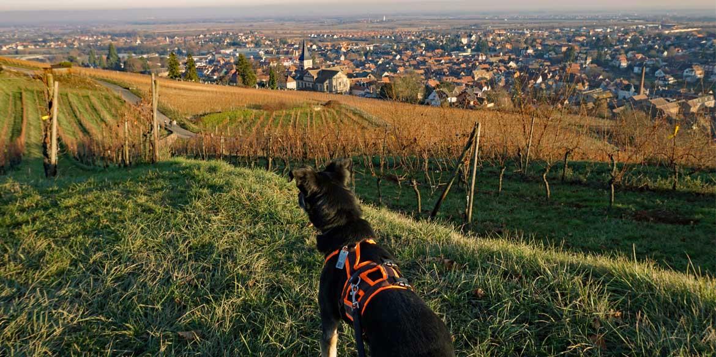 Bellen auf Französisch: unser erster Trip ins Elsass