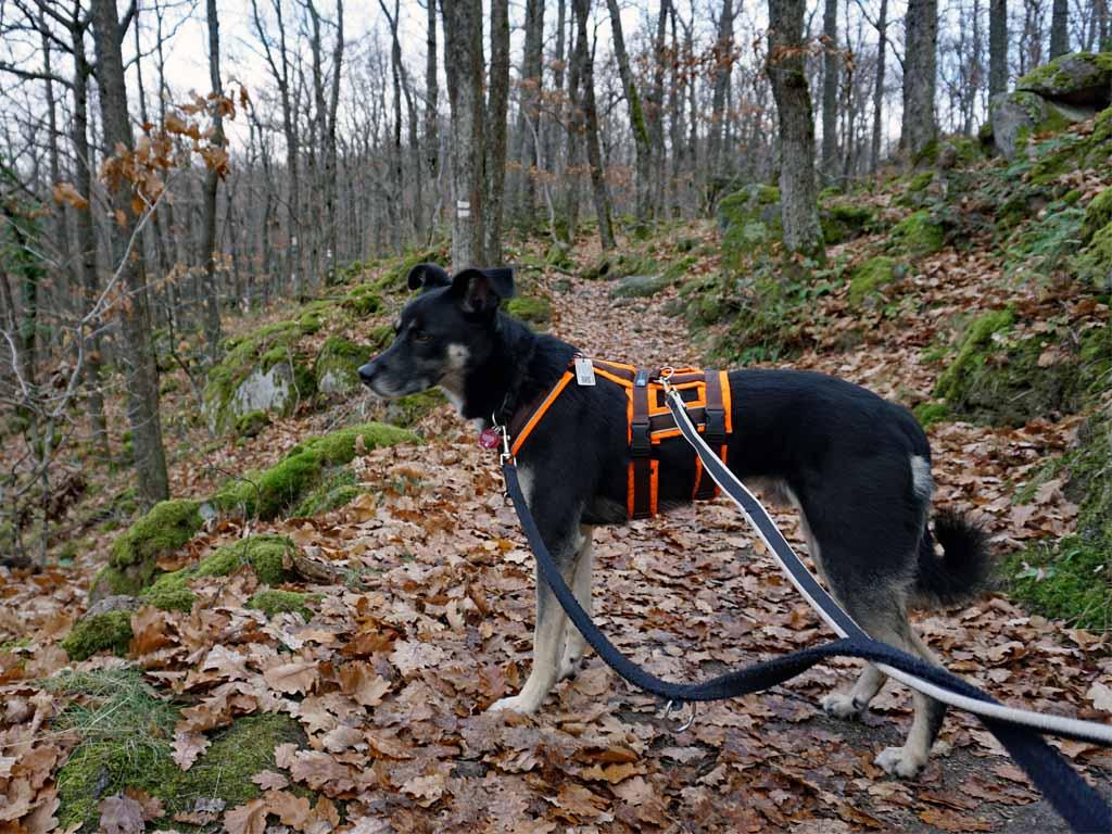 wandern-mit-hund-im-elsass-copyright-hund-im-gepaeck-8