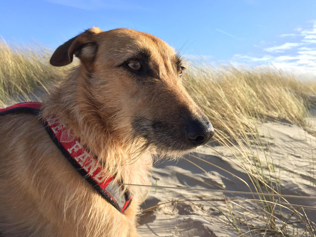 Fanø ohne Hund ist möglich – aber sinnlos - Hund im Gepäck ...