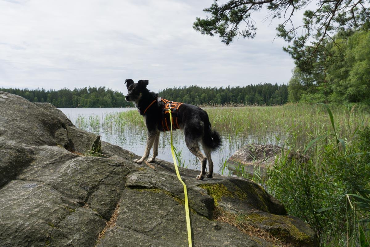 Hund steht auf Steinen am See