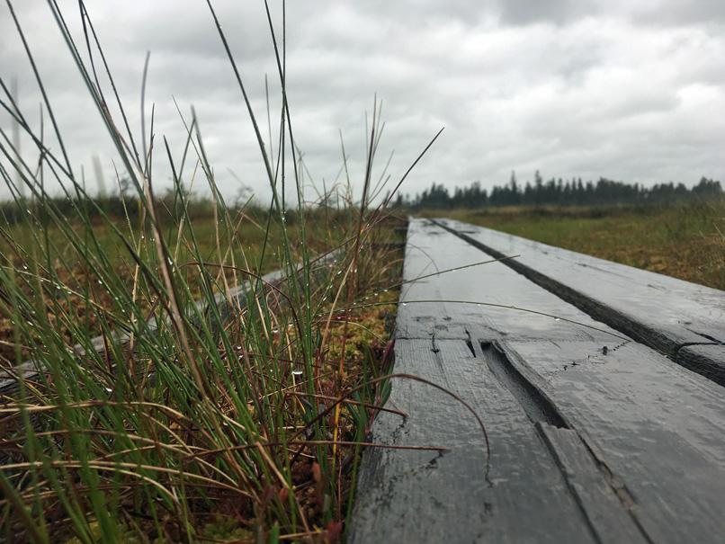 Ein Holzsteg, der über das Moor im Mosse Store Nationalpark führt.