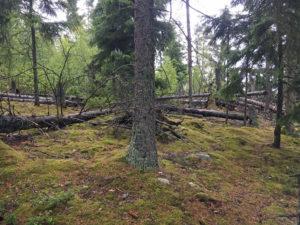 Bäume des Wäldchen beim Mosse Store Nationalpark