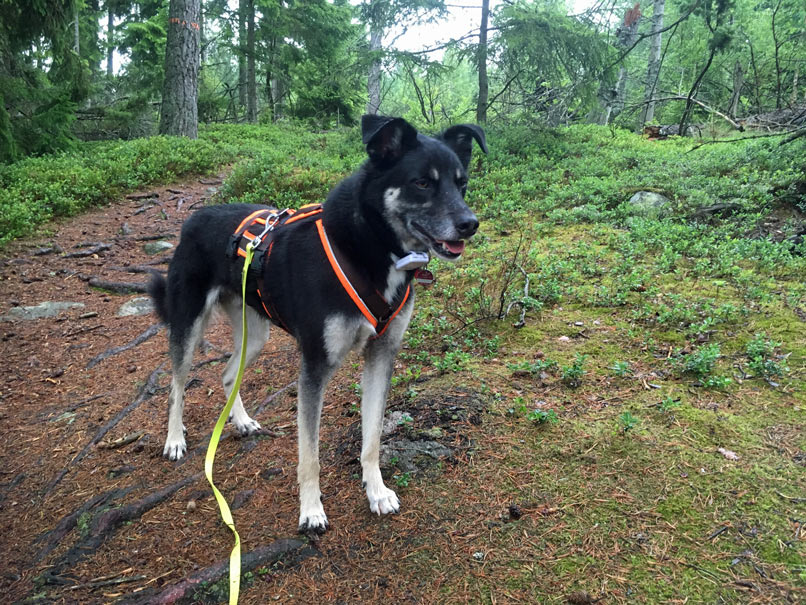 Mein Hund im Wald