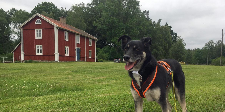 Mit Hund durch Schweden: Roadtrip Teil 1