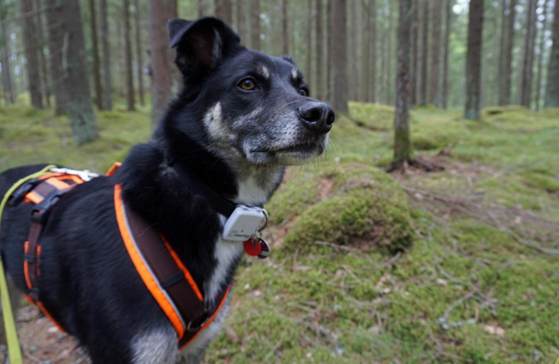Nahaufnahme: Alex im Waldgebiet vom Campingplatz in Hätteboda