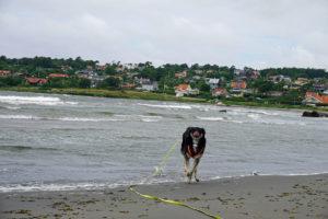 Hund pest über den Strand.