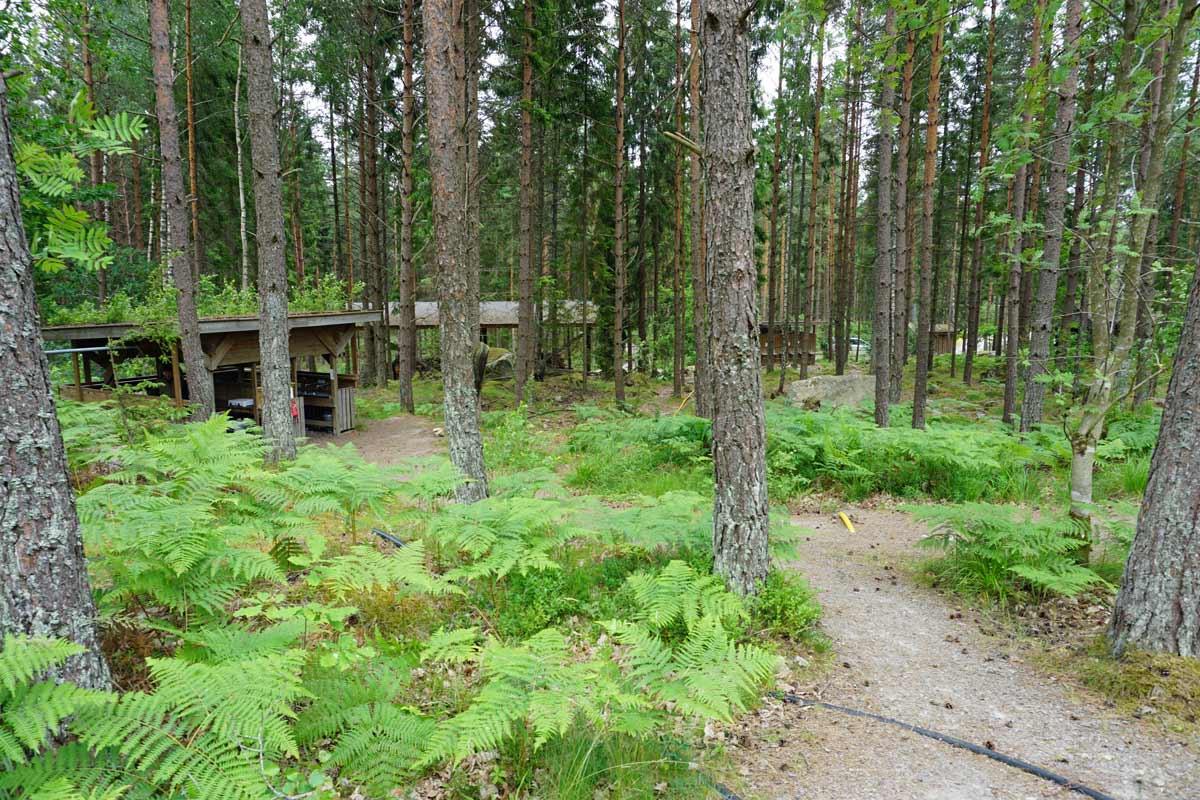 Durch die Bäume lässt sich die Außernküche des Vildmarkscamping erkennen.