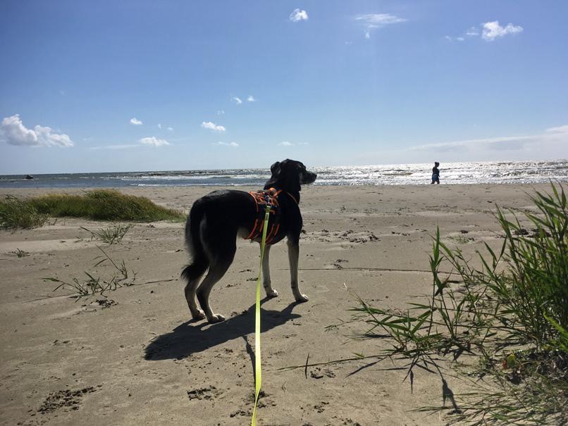 Hund am Strand von Haverdal