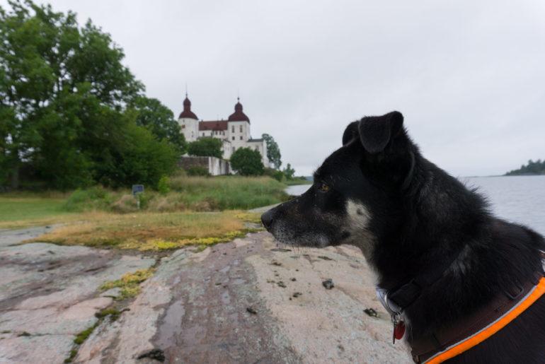 Schloss Läckö mit Hund